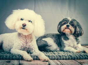 Dogs Photoshoot-18